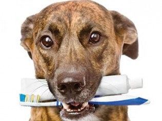 Dental Health for Your Pet  Is Important